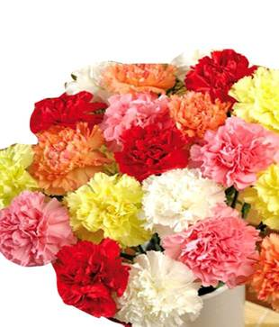 Charming Carnations Bunch