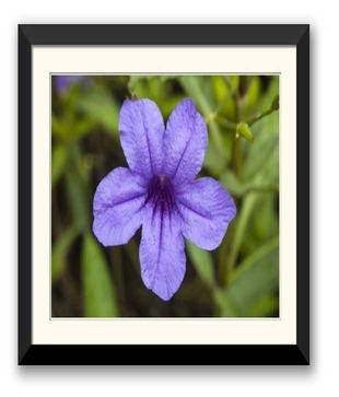 Flatpebble Violet Flower multicolour Paintings