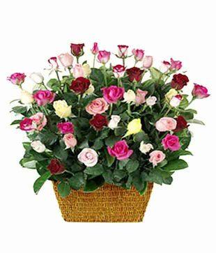 50 Romantic Colourful Roses Basket