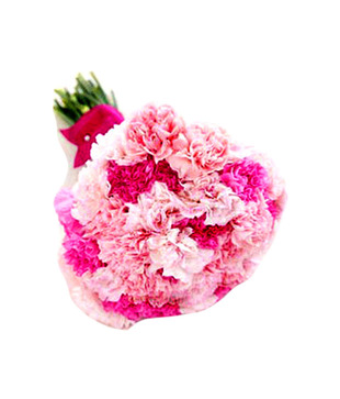 12 Pink Carnations Bouquet