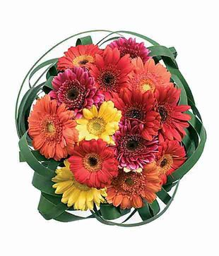 12 Mix Gerberas Bouquet