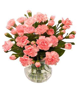 Soft Pink Carnations N Roses Arranged in a Vase