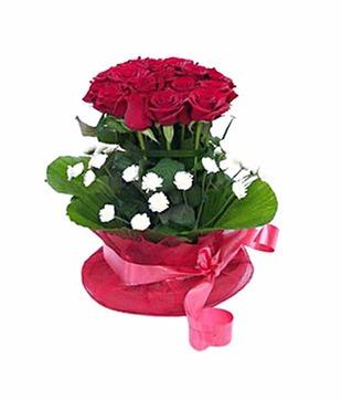 Roses Stem