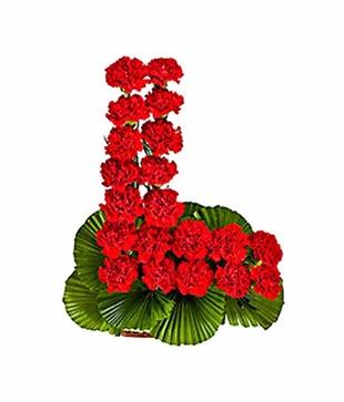 Carnations Love