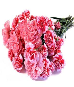 Heavenly Pink Carnations